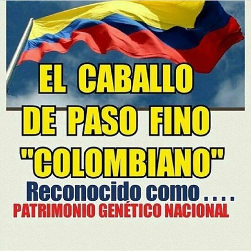 Caballo de paso fino colombiano ya es patrimonio genético
