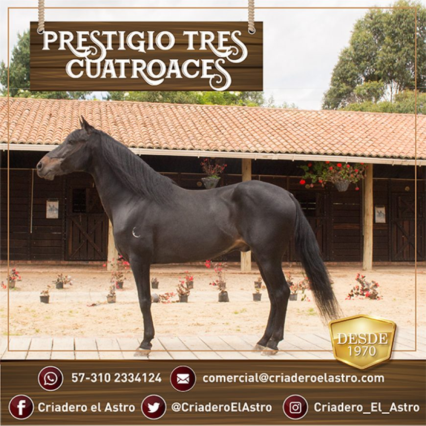 PRESTIGIO III DE 4 ACES GRAN PROMOCIÓN DE SALTOS 3×1