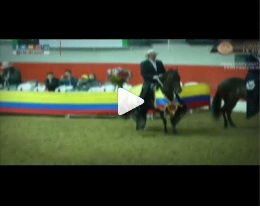 Este 2018 seguiremos trabajando en la difusión del caballo criollo colombiano.