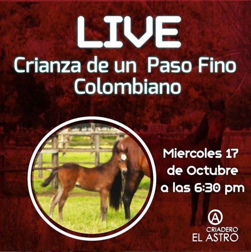 Live, Sobre la crianza del Caballo de Paso Fino Colombiano.