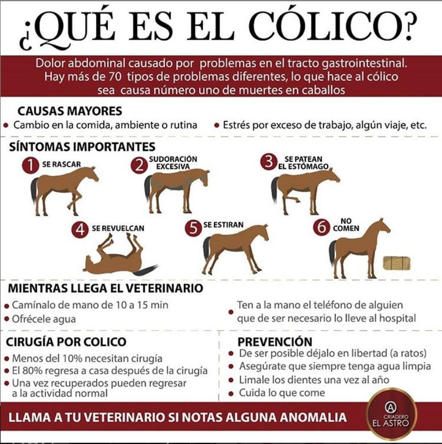 Aprende con nosotros a identificar los síntomas de esta problematica tan común en los Equinos.